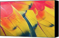 Parrot Canvas Prints - Parrot Feathers Canvas Print by Flash Parker