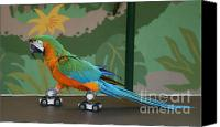 Skates Canvas Prints - Parrot on skates Canvas Print by Ruth Hallam