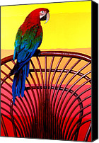 Bold Canvas Prints - Parrot Sitting On Chair Canvas Print by Garry Gay
