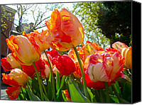 Phillie Canvas Prints - Parrot Tulips in Philadelphia Canvas Print by Carol Senske