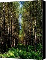 Trees Canvas Prints - Passage Canvas Print by Roberto Alamino