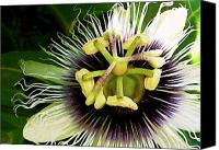 Molokai Canvas Prints - Passion Fruit Flower Canvas Print by James Temple