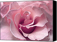 Pink Flower Canvas Prints - Passion Pink Rose Flower Canvas Print by Jennie Marie Schell