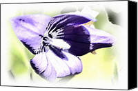 Susan Leggett Canvas Prints - Pastel Iris Canvas Print by Susan Leggett