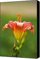 Debbie Photo Canvas Prints - Pastel Lilyform Canvas Print by Deborah  Crew-Johnson