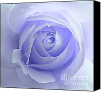 Purple Floral Canvas Prints - Pastel Purple Rose Flower Canvas Print by Jennie Marie Schell