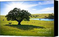 Rural Scenery Canvas Prints - Pasturing cows Canvas Print by Carlos Caetano