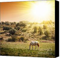 Weather Canvas Prints - Pasturing Horse Canvas Print by Carlos Caetano