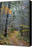 Autumn Photographs Canvas Prints - Path At Panther Falls Canvas Print by Kathy Jennings