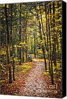Hiking Canvas Prints - Path in fall forest Canvas Print by Elena Elisseeva