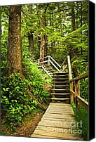 British Columbia Canvas Prints - Path in temperate rainforest Canvas Print by Elena Elisseeva