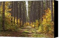 Country Dirt Roads Photo Canvas Prints - Path Into The Forest In Autumn Sault Canvas Print by Susan Dykstra