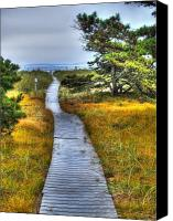 Stormy Canvas Prints - Path to Bliss Canvas Print by Tammy Wetzel