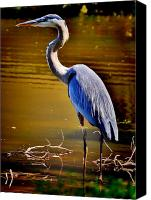 Herons Canvas Prints - Patience of the Heron Canvas Print by Emily Stauring