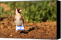 Birds Pyrography Canvas Prints - Patriotic goldfinch Canvas Print by Alon Meir
