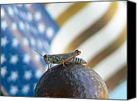 Grasshopper Canvas Prints - Patriotic Grasshopper Canvas Print by Pamela Patch