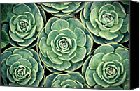 Natural Pattern Photo Canvas Prints - Pattern From Nature Canvas Print by Bbq