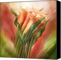 The Art Of Carol Cavalaris Mixed Media Canvas Prints - Peach Callas Canvas Print by Carol Cavalaris