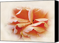 Peach Colored Canvas Prints - Peach Delight Canvas Print by Kaye Menner