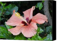 Peach Colored Canvas Prints - Peach Hues 2 - Hibiscus Canvas Print by Carol Reynolds