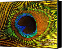Ranjini Kandasamy Canvas Prints - Peacock Feather Canvas Print by Ranjini Kandasamy