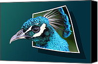 Freedom Mixed Media Canvas Prints - Peacock Canvas Print by Shane Bechler