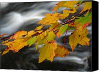 Autumn Canvas Prints - Peak of Autumn Canvas Print by Juergen Roth