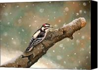 Woodpecker Canvas Prints - Pecking Through Rain Sleet and Snow Canvas Print by Carole Rickards