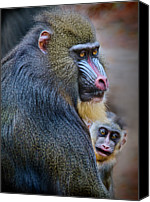 Two Animals Canvas Prints - Peek-a-boo Canvas Print by Laura M. Vear