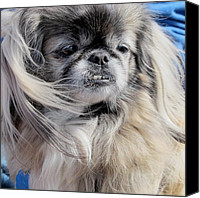 Long Pyrography Canvas Prints - Pekingese Portrait  Canvas Print by Valia Bradshaw