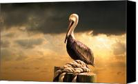 Storm Digital Art Canvas Prints - Pelican after a storm Canvas Print by Mal Bray