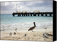 Renata Ratajczyk Canvas Prints - Pelican and Seagulls on the Beach in Playa del Carmen - Mexico. Canvas Print by Renata Ratajczyk