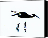 Sup Canvas Prints - Pelican and SUPs Canvas Print by David Rearwin