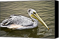 Beige Colours Canvas Prints - Pelican Canvas Print by Heiko Koehrer-Wagner