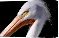 Pelicans Canvas Prints - Pelican Portrait Canvas Print by Bruce J Robinson