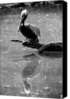Bird Canvas Prints - Pelican Reflections Canvas Print by Dustin K Ryan