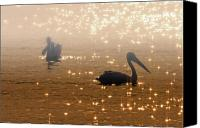 Waterfowl Canvas Prints - Pelican Sunrise Canvas Print by Mike  Dawson