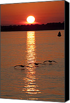 Birds Canvas Prints - Pelican Sunset Canvas Print by Dustin K Ryan