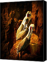 Rock Formation Canvas Prints - Pelicans Corner Canvas Print by Leah Moore