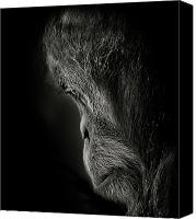 Orangutan Photo Canvas Prints - Pensive Canvas Print by Animus Photography