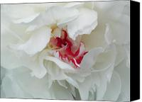 Red And White Canvas Prints - Peony Canvas Print by Jim Wright