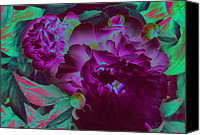 First Star Art By Jrr Canvas Prints - Peony Passion Canvas Print by First Star Art