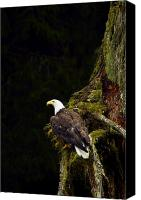 Eagle Watching Canvas Prints - Perched Eagle Canvas Print by Richard Wear
