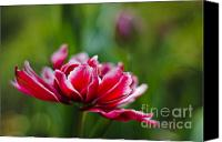Royal Botanical Gardens Canvas Prints - Perfect Beauty... Canvas Print by Christine Kapler