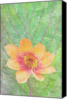 Home Decor Canvas Prints - Perfect Peach Canvas Print by JQ Licensing