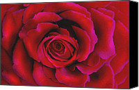 Red Mixed Media Canvas Prints - Perfect Rose Canvas Print by Joel Payne