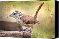 Carolina Wren Canvas Prints - Perky Little Wren Canvas Print by Bonnie Barry