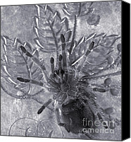 Creepy Canvas Prints - Pet Rose Hair Tarantula on Antique Silverplate Canvas Print by Janeen Wassink Searles