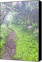 Gnarly Canvas Prints - Petaled Path Canvas Print by Rob Travis