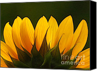 Yellow Flower Canvas Prints - Petales de Soleil - a01 Canvas Print by Variance Collections